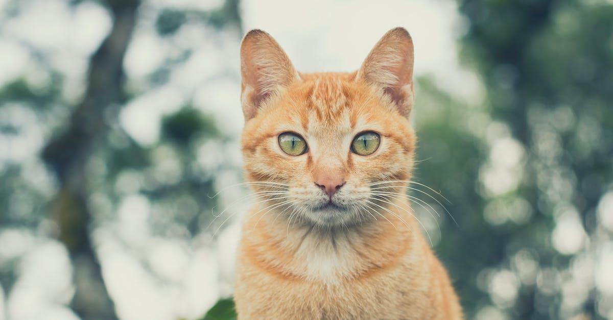 Free stock photo of animal, Asian, cat