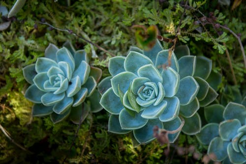 Free stock photo of garden, nature, succulent plant