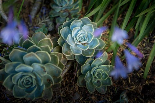 Selective Focus Photography of Succulents
