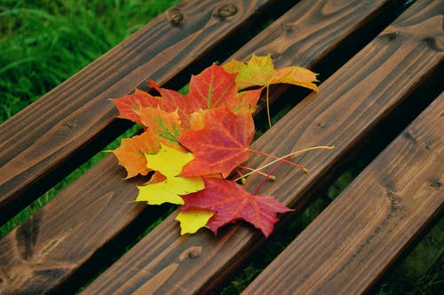 Maple Leaf on Top of Brown Wooden Bench