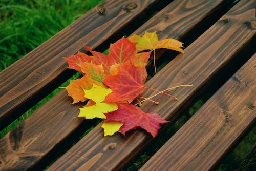 가을, 나무, 다채로운, 단풍잎의 무료 스톡 사진