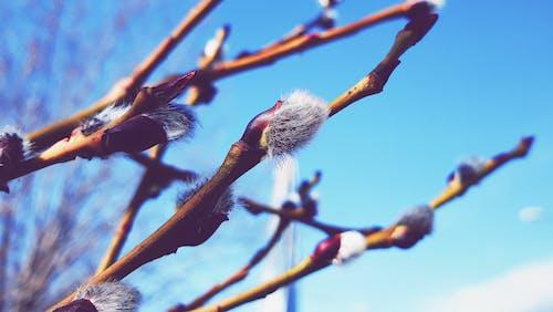 Photos gratuites de arbres, ciel, nature, printemps