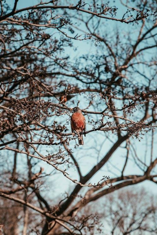分公司, 棕色的鳥, 棲息, 羽毛 的 免費圖庫相片