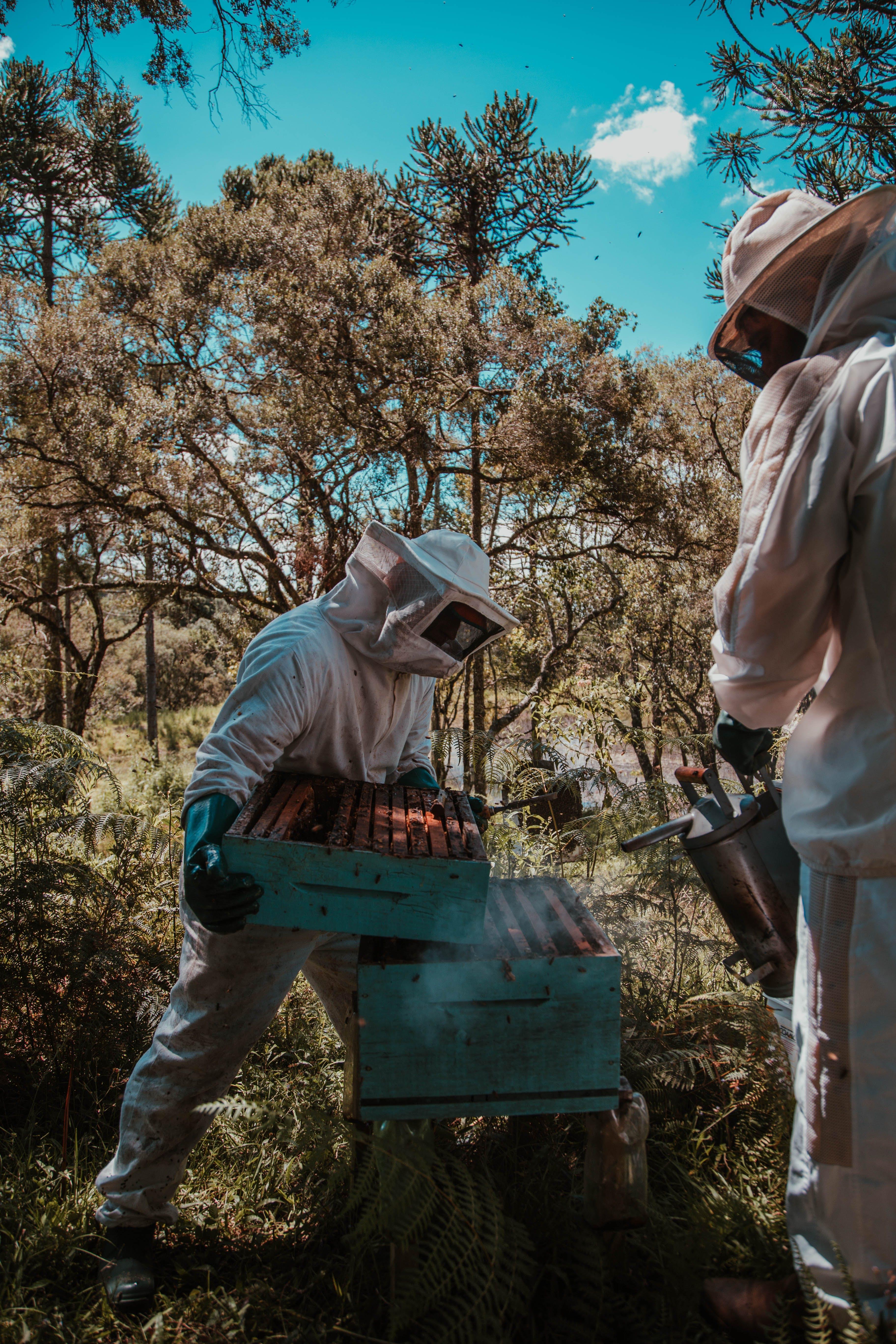 Gratis lagerfoto af bi, biavl, bikube, dagslys