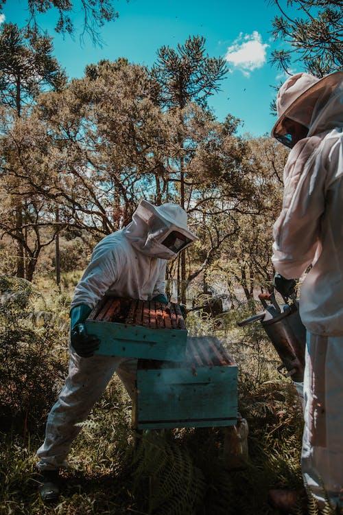 Photos gratuites de abeille, agriculture, aliments, apiculture