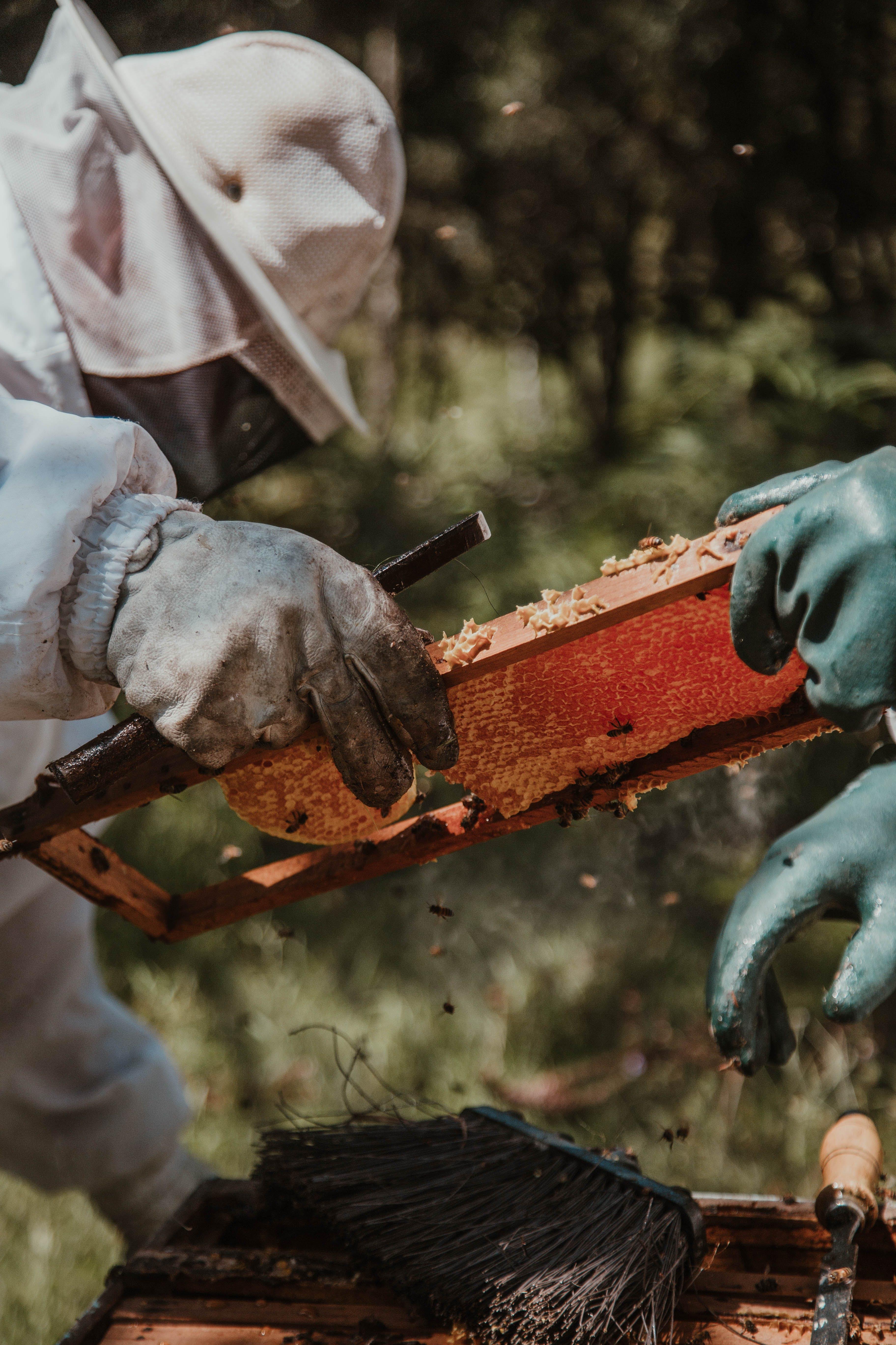 Gratis lagerfoto af arbejde, arbejder, biavl, bier