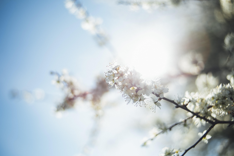 Ảnh lưu trữ miễn phí về chi nhánh, danh lam thắng cảnh, hệ thực vật, hoa