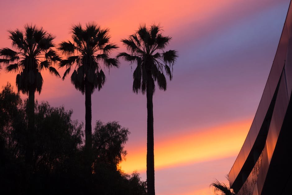Low Angle View of Three Palm Trees during Sunset