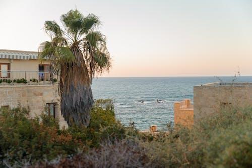 Free stock photo of Israel, mediterranean, palm, sea