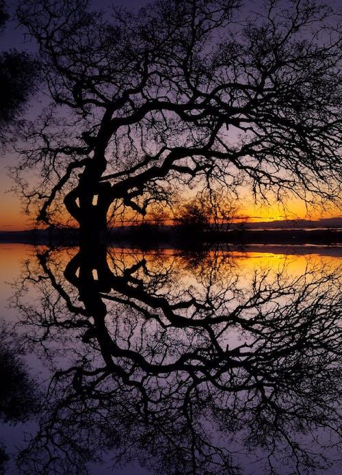 Fotos de stock gratuitas de árbol, reflejos de luz, sol de la mañana, sol dorado