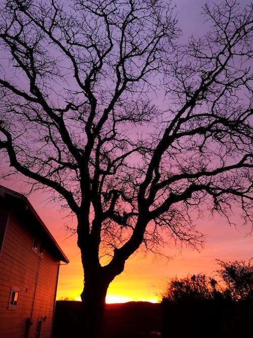 Foto d'estoc gratuïta de arbre, expressionisme abstracte, matí, silueta