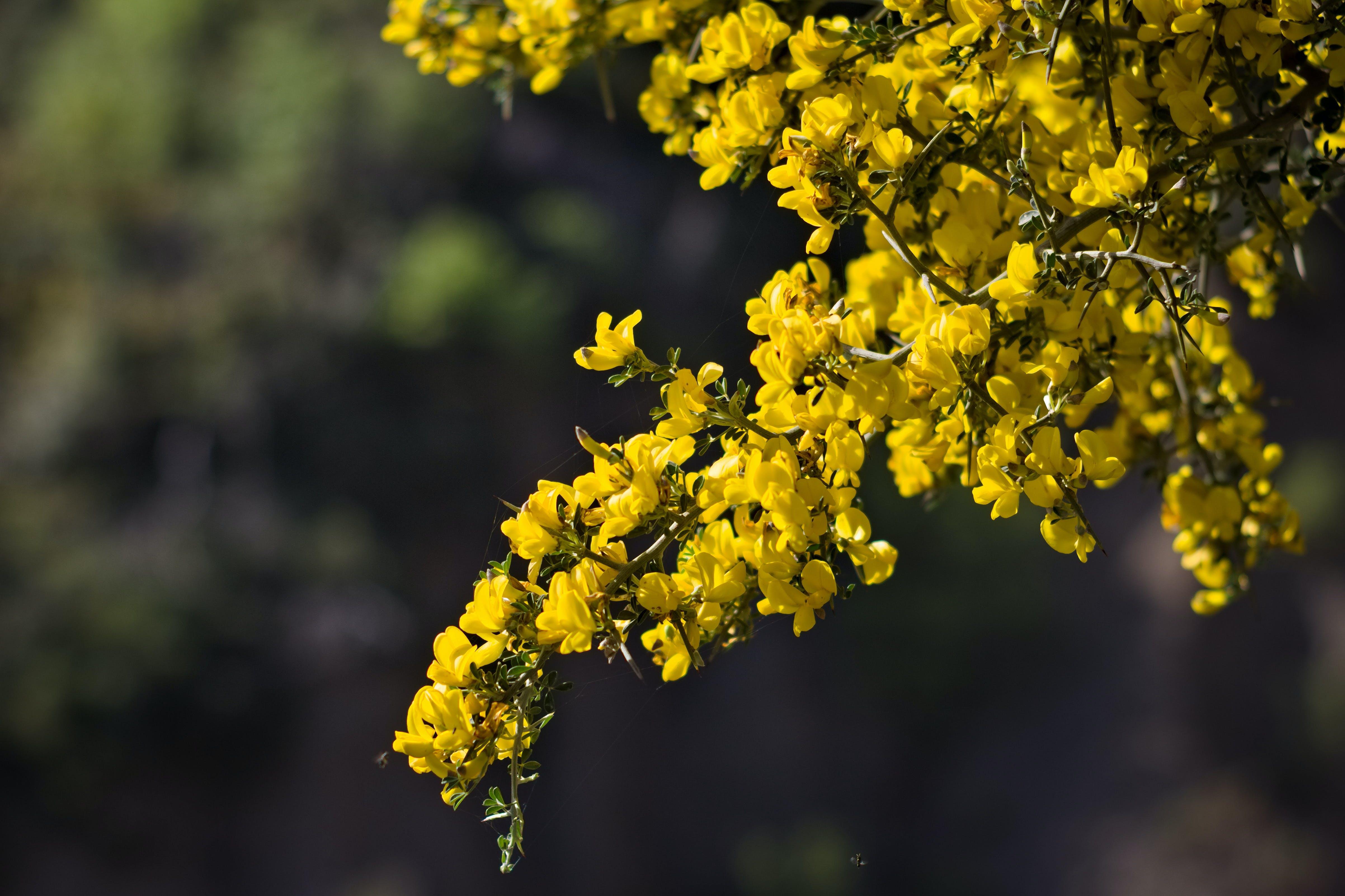 Gratis lagerfoto af blomster, gule blomster, smukke blomster