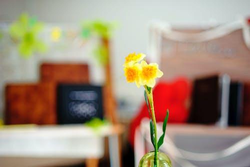 Foto d'estoc gratuïta de boda, decoració, flor, groc