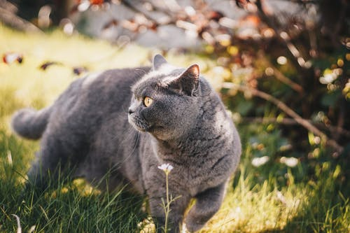 Selective Focus Photography Of Grey Cat