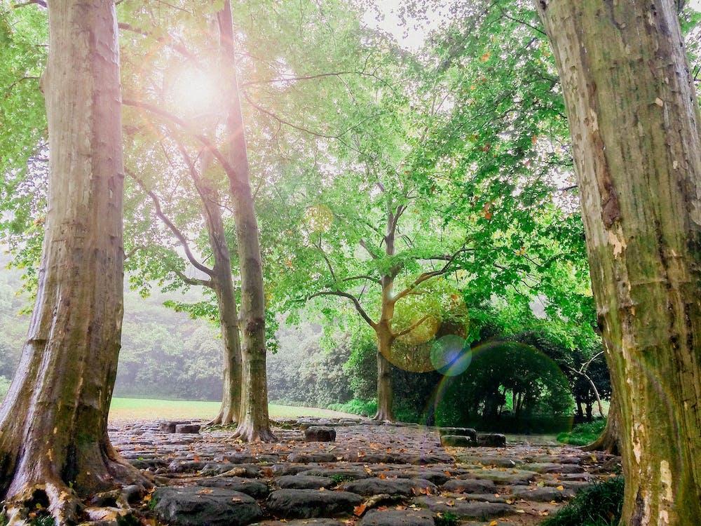 alam, batang pohon, batu