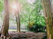 landscape, nature, summer