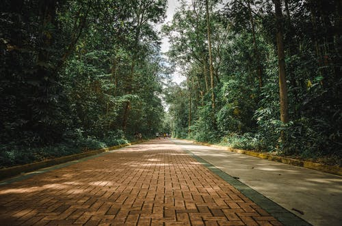 Kostenloses Stock Foto zu bäume, beratung, draußen, grün