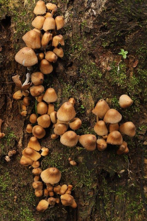 Δωρεάν στοκ φωτογραφιών με μύκητες