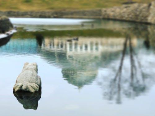 Gratis lagerfoto af dam, frø, havebassin, refleksion