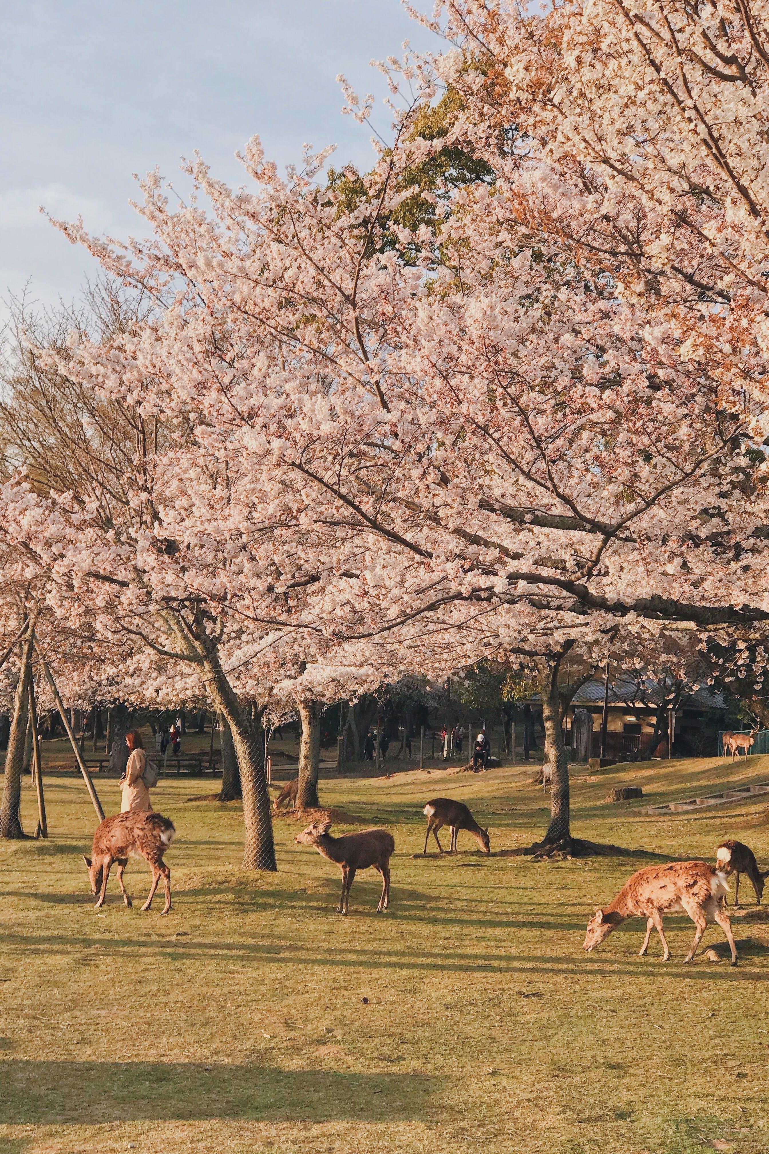 Kostenloses Stock Foto zu außerorts, bäume, blühen, blumen