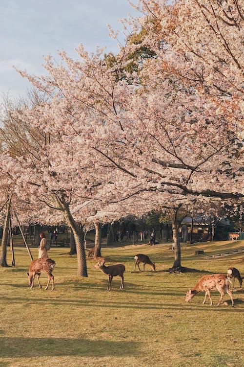 Animals On Green Grass Field
