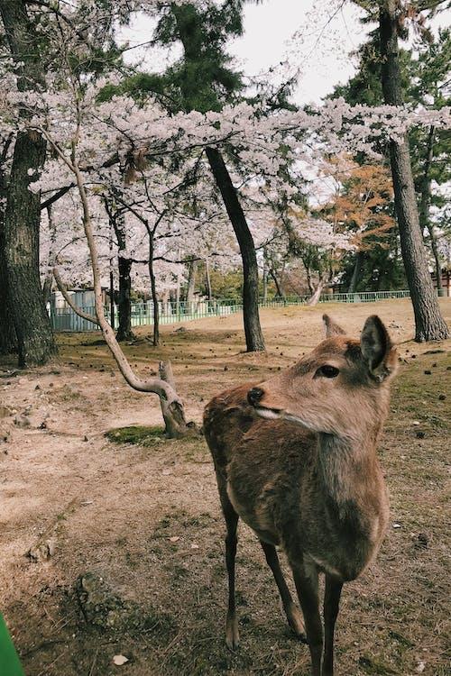 animais selvagens, animal, ao ar livre