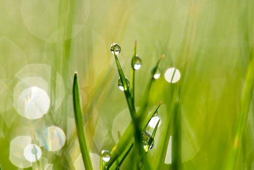 Безкоштовне стокове фото на тему «зростання, макрофотографія, мокрий, розмиття»