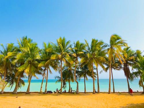 地點, 天空, 晴朗的天空, 椰子 的 免费素材照片