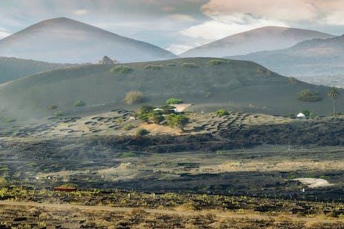 Free stock photo of beautiful landscape, haze, hills, palm trees