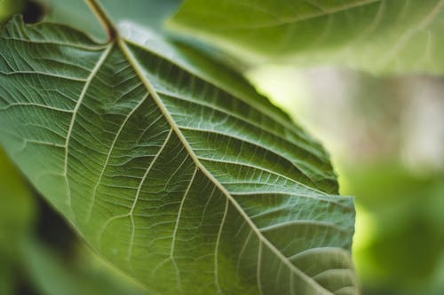 Free stock photo of ants, beauty in nature, Big leaf