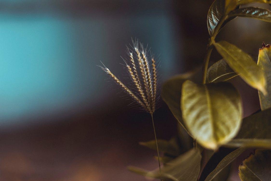 增長, 大自然, 天性