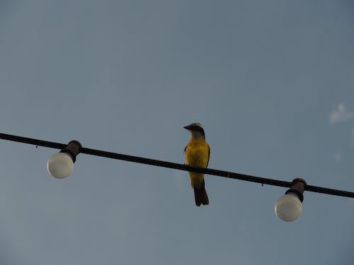 Ảnh lưu trữ miễn phí về bầu trời, chim, đèn