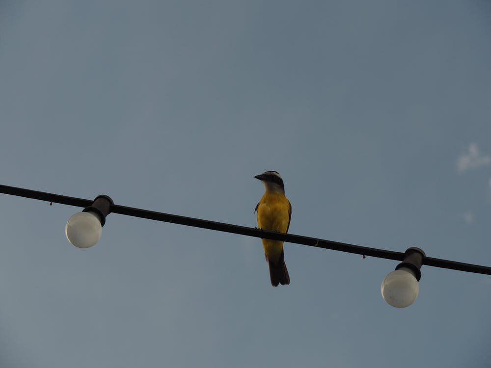 Free stock photo of bird, lamps, sky