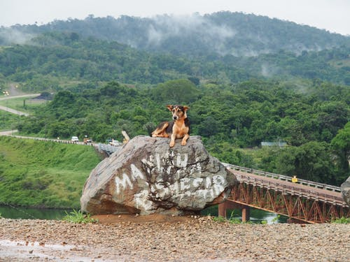 Free stock photo of bridge, dog, mountain, suriname