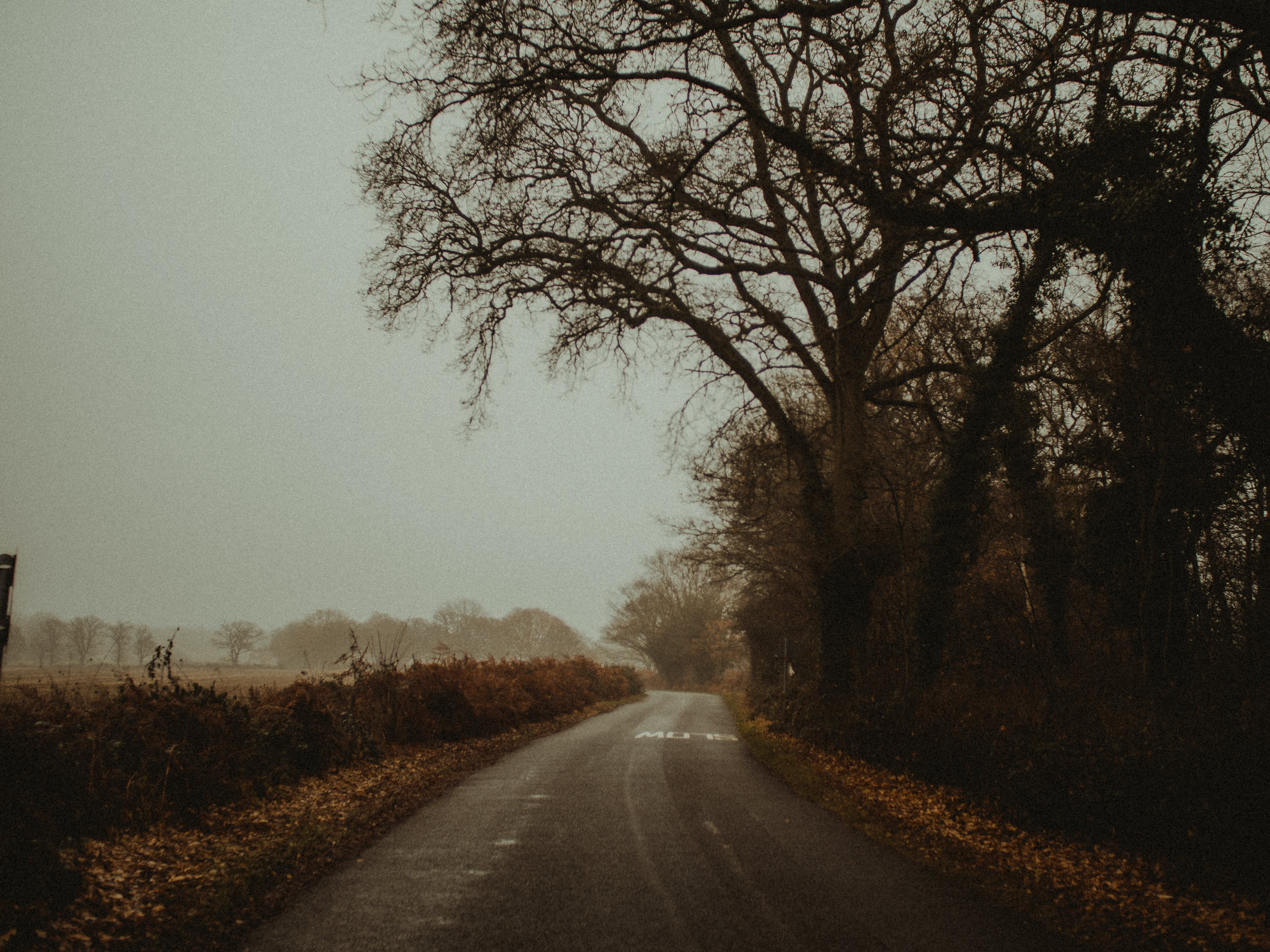 Road Near Forest