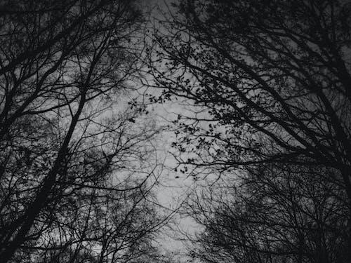 Ingyenes stockfotó fák témában
