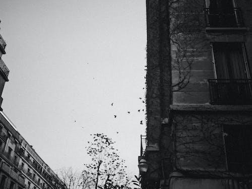 Darmowe zdjęcie z galerii z architektura, budynek, ciemny, czarno-biały
