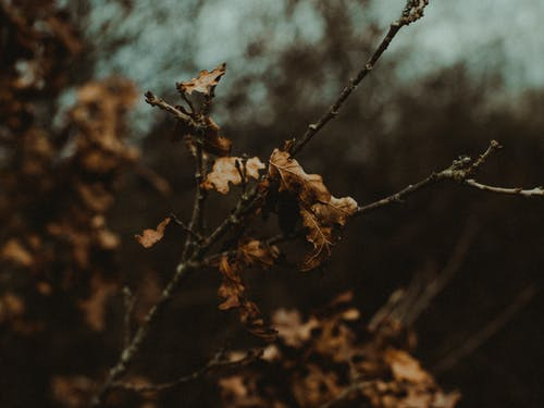 Selective Focus Photography Of Dry Leaves