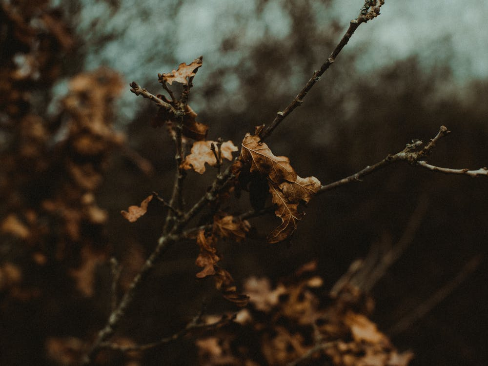 alam, cabang, daun kering