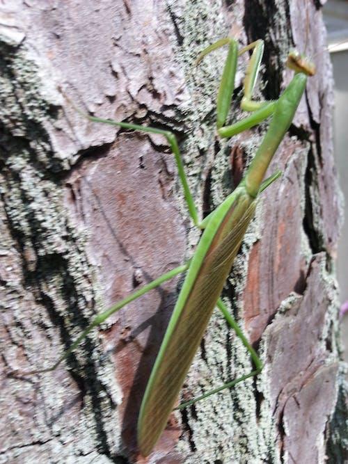 バグ, 昆虫の無料の写真素材