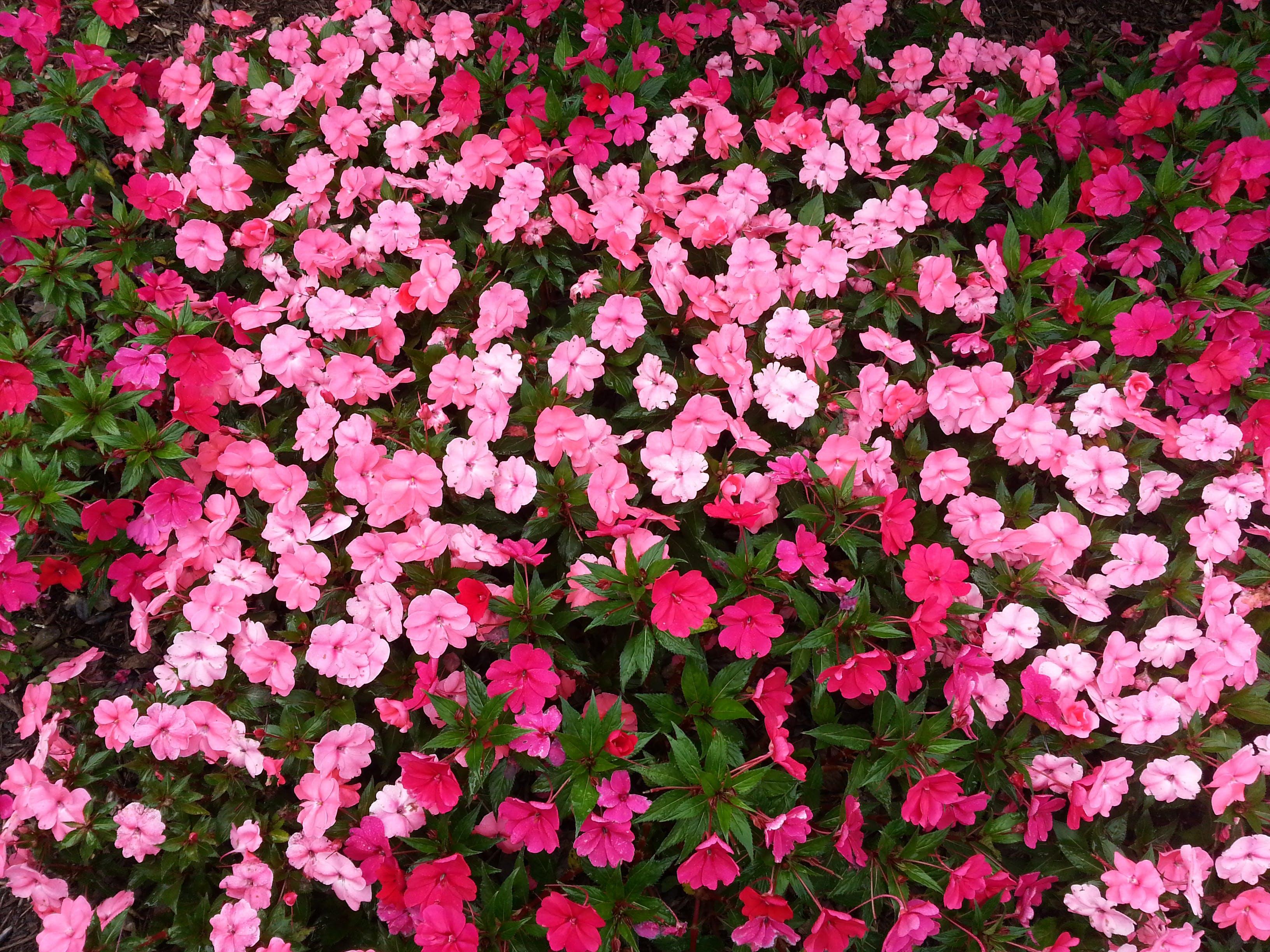 Základová fotografie zdarma na téma barevný, barva, botanický, flóra