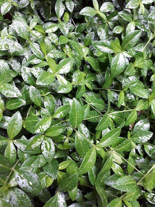 คลังภาพถ่ายฟรี ของ พืชสีเขียว, ภาพพื้นหลัง, วอลล์เปเปอร์มือถือ