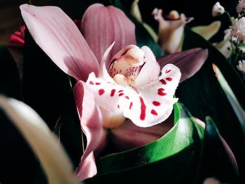 คลังภาพถ่ายฟรี ของ กล้วยไม้, ดอกไม้