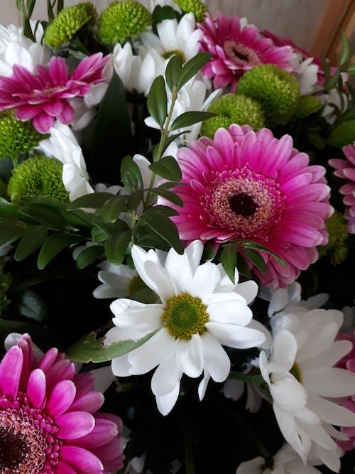 bitki örtüsü, çiçek, Çiçek demeti, Çiçekler içeren Ücretsiz stok fotoğraf