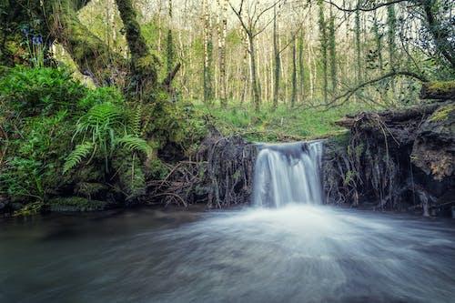 Foto stok gratis air terjun, alam, aliran, hutan