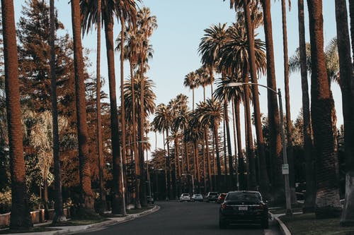 Cars in Palm Lined Drive
