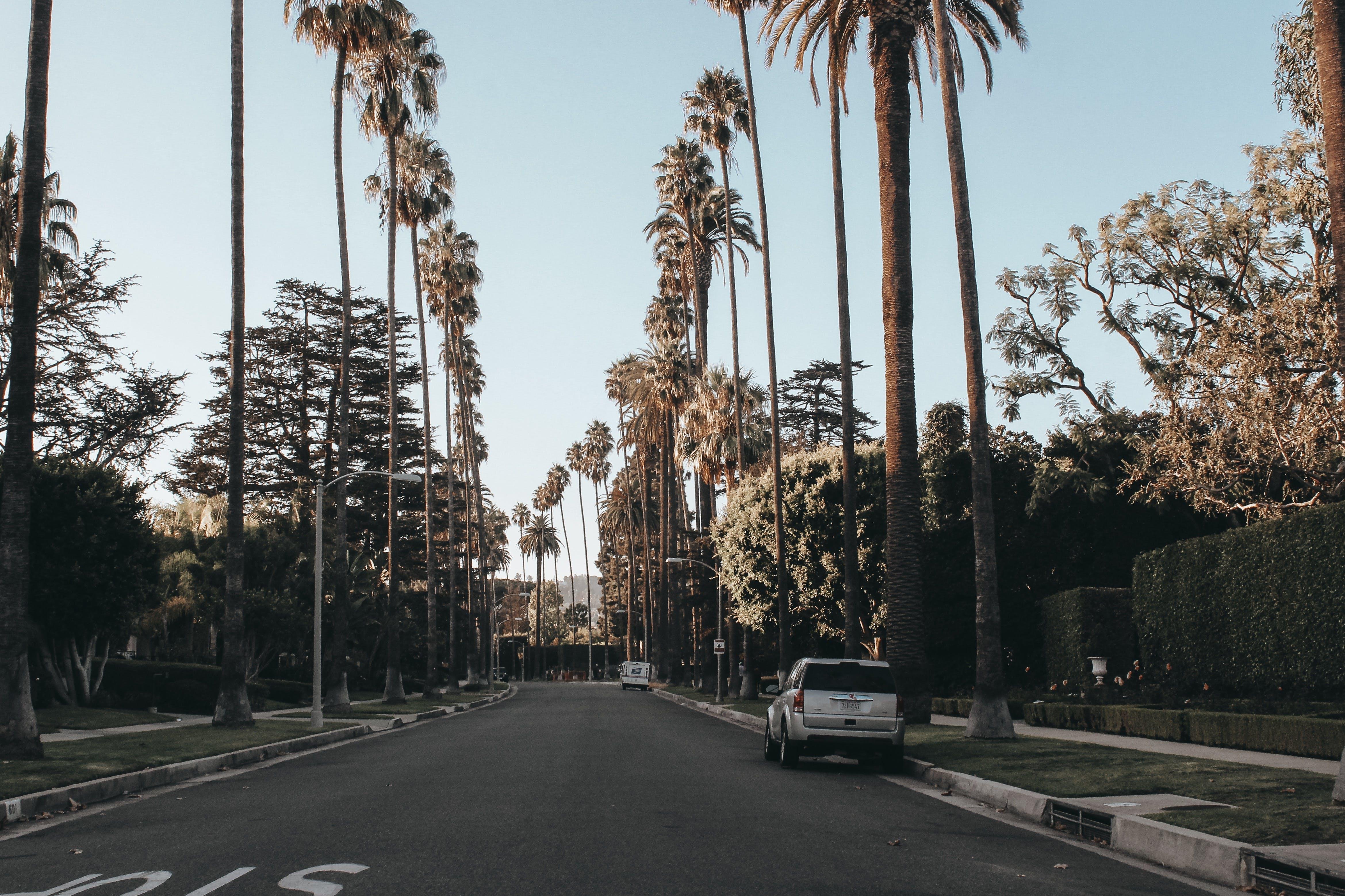 Kostenloses Stock Foto zu asphalt, auto, bäume, dämmerung