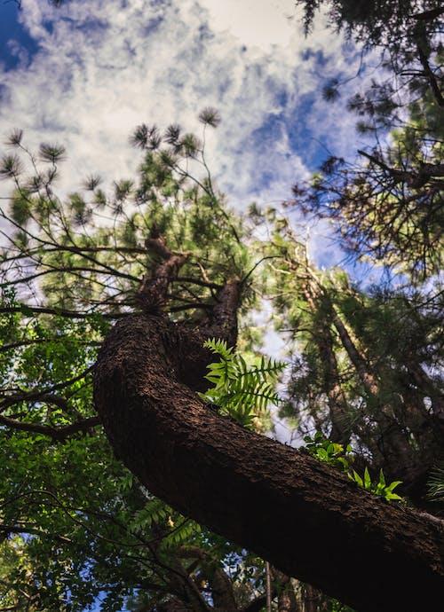 Безкоштовне стокове фото на тему «luz, боке, дерева, дерево»