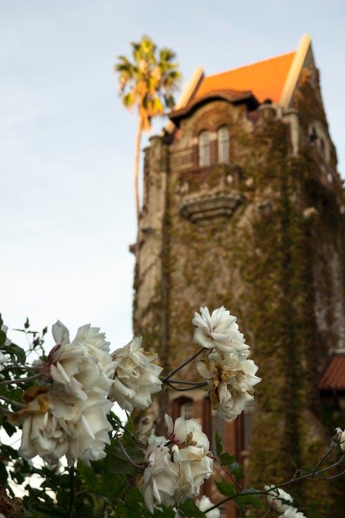 Immagine gratuita di bianco, campus, cielo, colore
