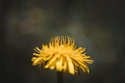 Безкоштовне стокове фото на тему «#yellow, життя, жовтий, макрофотографія»